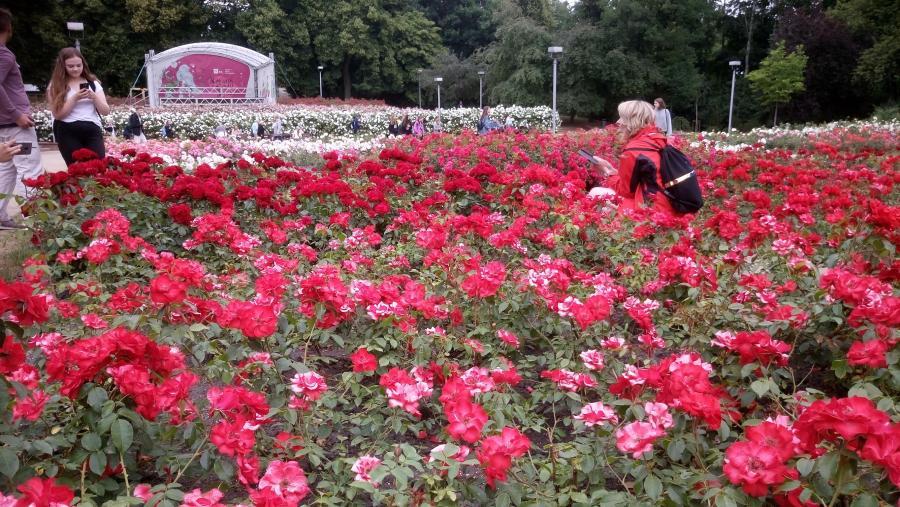 Różanka w Szczecinie