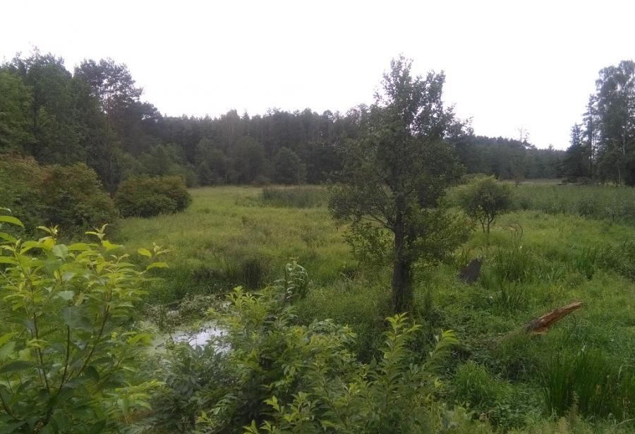 Lasy w okolicach Płocka.