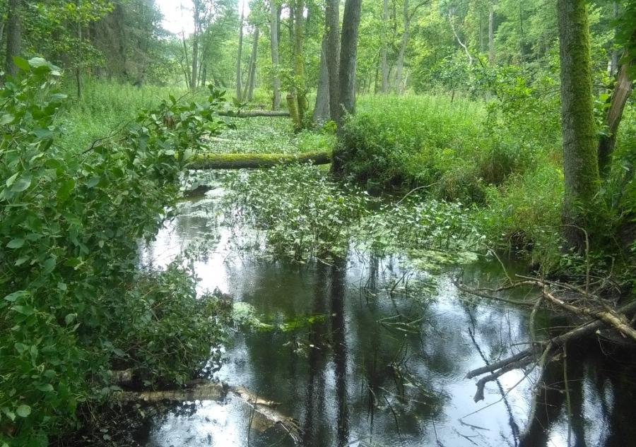 Lasy w okolicach Płocka., autor Wojewódzka Sylwia